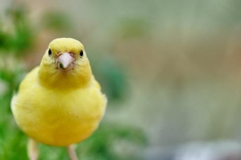 bird-3386323_1920