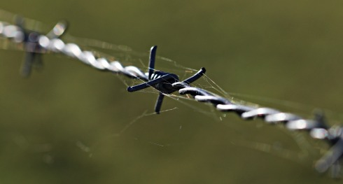 barbed-wire-1785533_1920