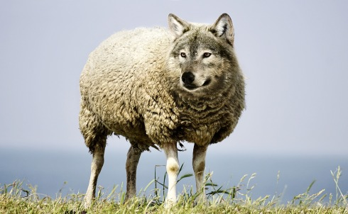 wolf-in-sheeps-clothing-2577813_1920